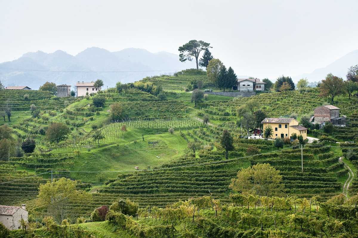 Weingut Bisol in Valdobbiadene, italien.